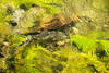 Mossy Bottom