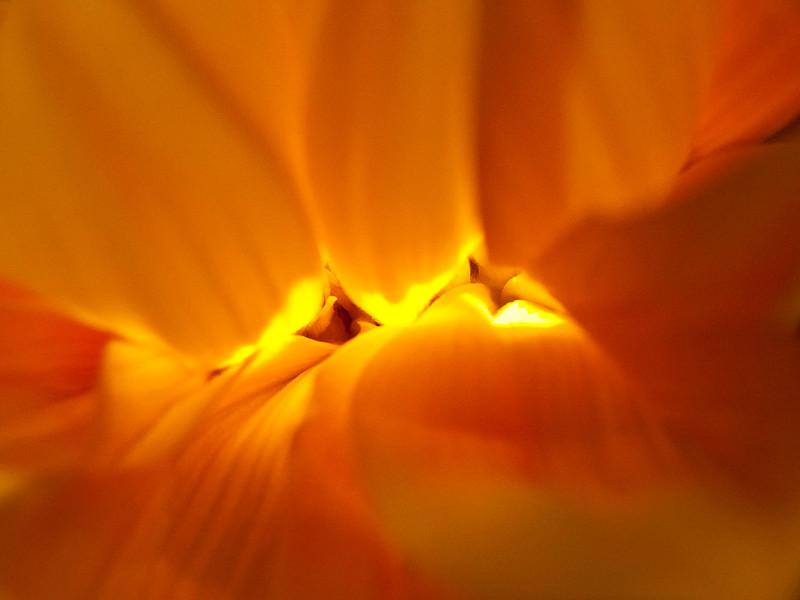 Orange Flower 5_10 1