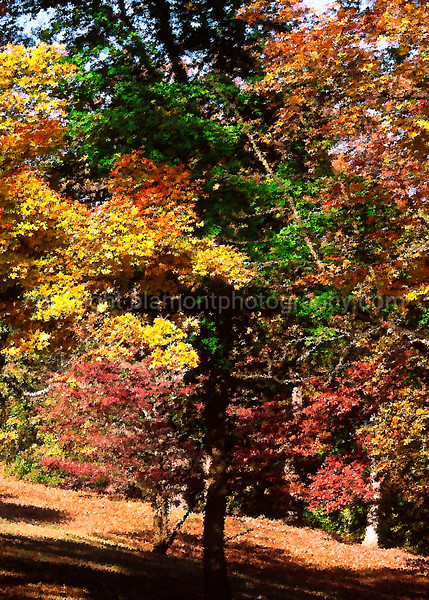 "Fall... Shot in Garden City, Chester, Pa. Inspired by Tim Cooper. A  Fabulous Teacher who Invisioned the 1st DI class at RMSP. I Admire all of his work. He taught me so much in so little time. I told him ""It was like givin a monkey a machine gun"" lol...)"