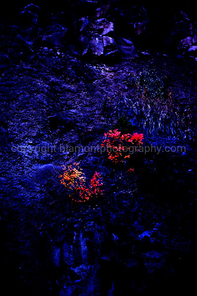 """""""Transformer""""...3D  Cobalt color...fun. I Shot in yellowstone Nat. Prk.  Inspired by Tim Cooper and Mark Johnson. Please Google these Masters names if you haven't already!"""