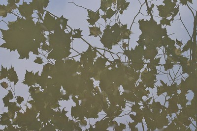 Leaves Water Reflection I