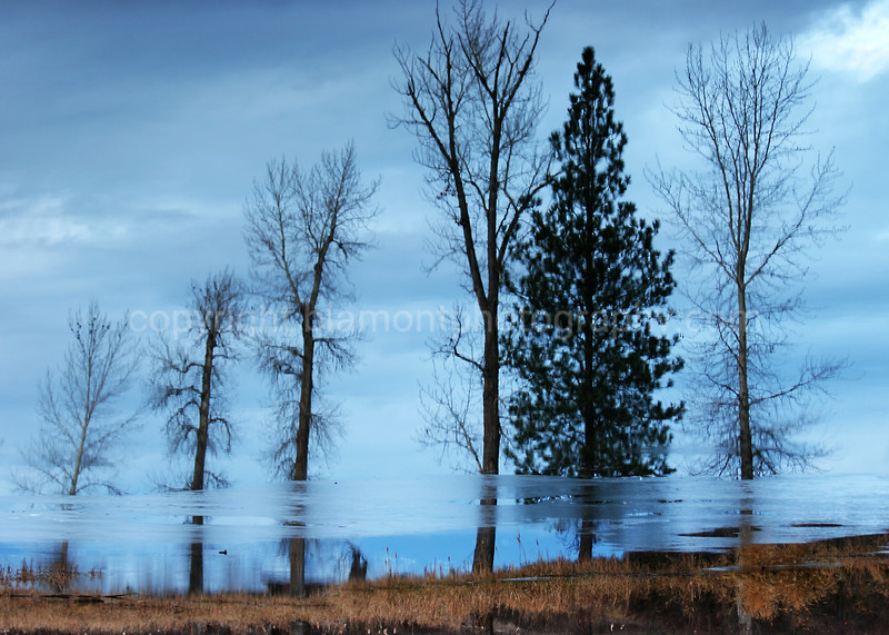 """Winter Freezes"" Lee Metcalf Wildlife Refuge. Mt. Abstract."