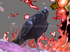 Craven Raven #2... Nevermore...at my chambers door... lol...Oh that Poe !-)