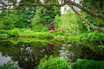Asticou Azalya Garden in Summer