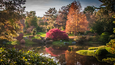 Asticou Azalea Garden in Fall