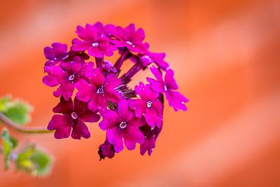 Acadia Floral