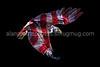 Eagle Flag blk revised