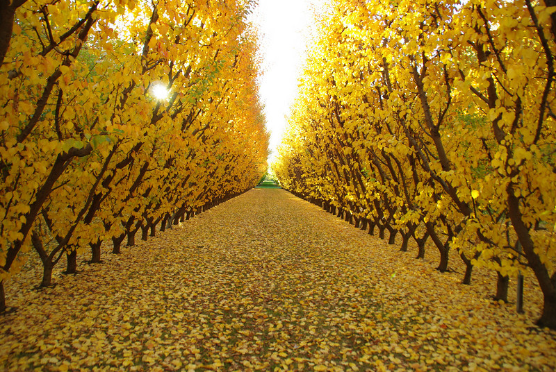 Jackson Orchards, Cromwell, New Zealand