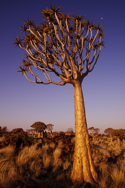 Quivertree Forest National Park, Namibia