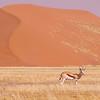 Sossusvlei, The Namib Desert, Namibia