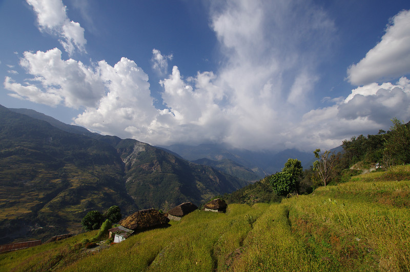 Panoramic view over the rice terrace of Nepal