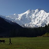 View from Fairy Meadows to Nanga Parbat (8126m)