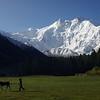 View from Fairy Meadows to Nanga Parbat (8126m)