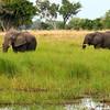 Elephants, near Shinde Lodge, Okavongo Delta, Botswana