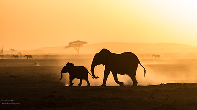 Amboseli Dream