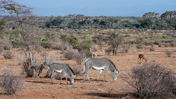 Samburu Unique Animals