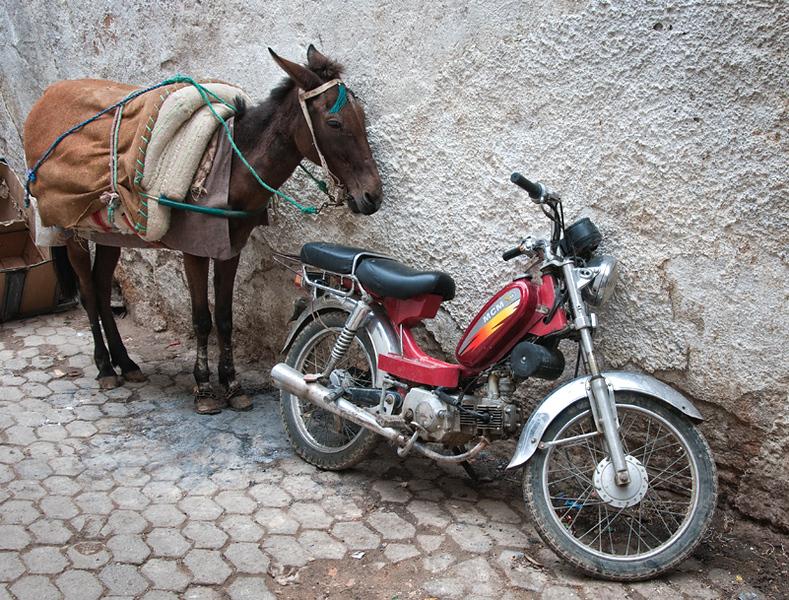 Fez medina, two modes of transportation