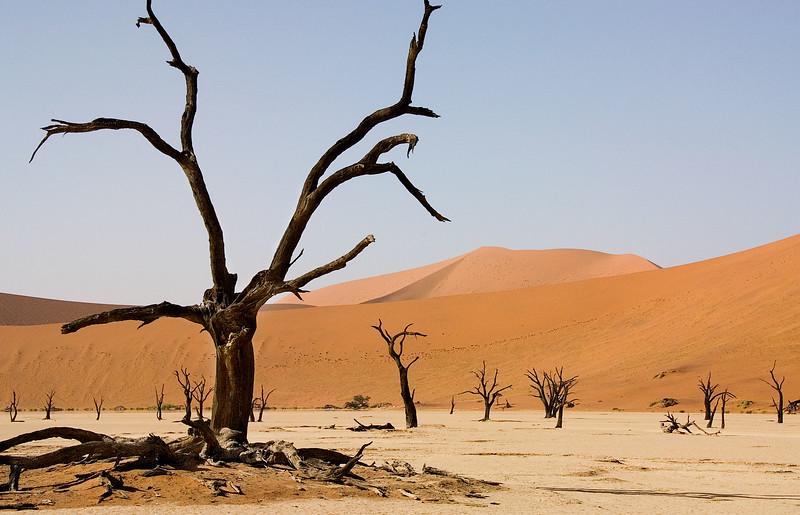 Deadvlei (Dead Lake), Namib Desert near Sossusvlei, southern Namibia