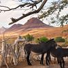 Burros, Damaraland village, Namibia
