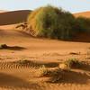 Namib Desert scene, Sossusvlei, southern Namibia