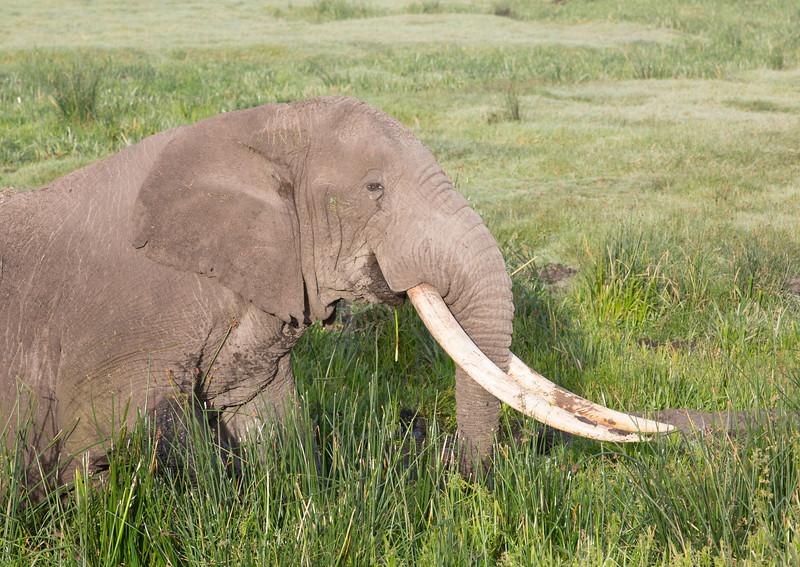 ELEPHANT TEST NAME