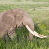 ELEPHANT TEST NAME