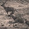 Running Kudu BW