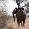 Elephant Turn - Rukiya