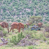 Elephant Gathering