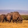 Amboseli Gathering