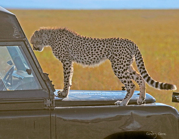 Window Shopping in the Mara
