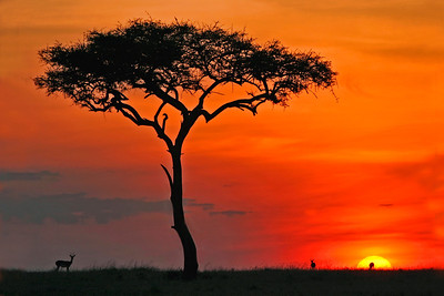 Sunset on the Masai Mara, Kenya