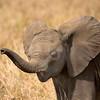 Baby Elephant Trumpet