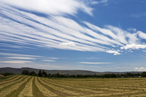 Windrows near Wide Hollow Creek in the Upper Yakima Valley