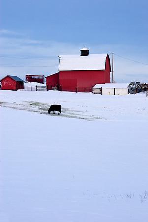 Wenas Creek Farm