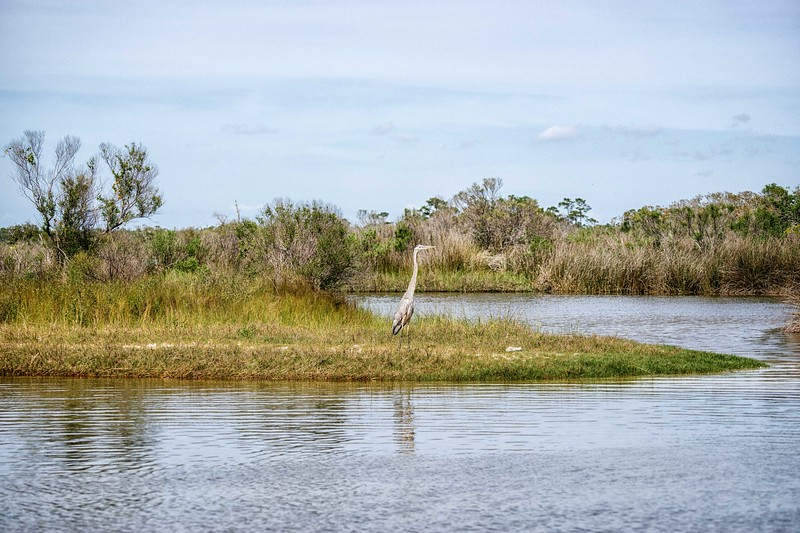 Egret and Marsh!