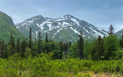 Bear Camp View