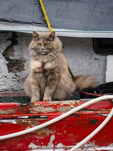Seward Sailor