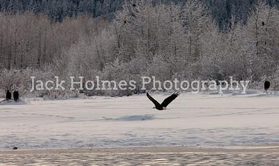 Eagle_Monday5D-205