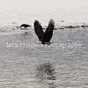 Eagle_Monday5D-356