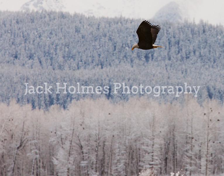 Eagle_Monday5D-264