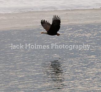 Eagle_Monday5D-360