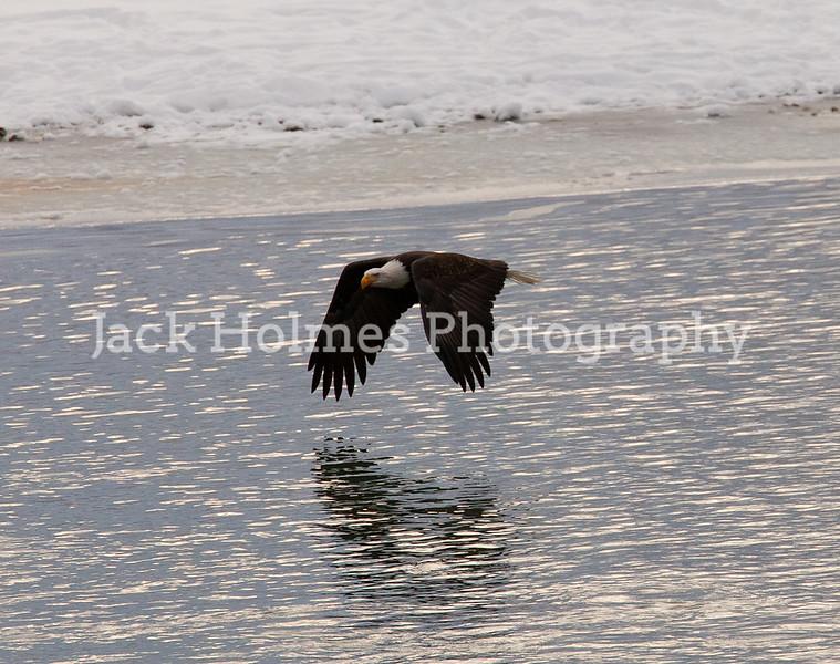 Eagle_Monday5D-358
