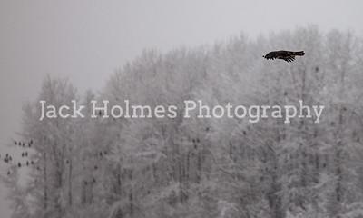 Eagle_Monday5D-67