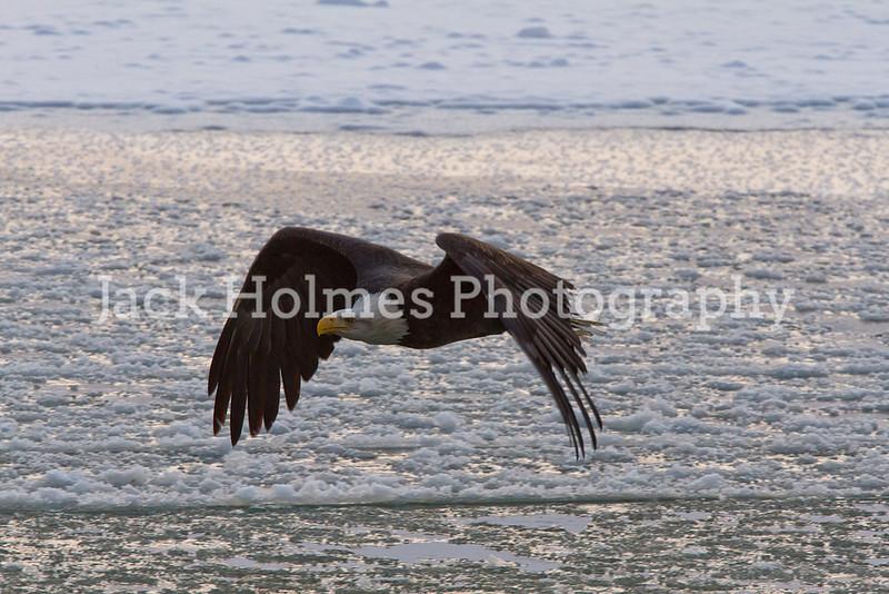Tuesday_Eagle_7D-407
