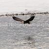 Eagle_Monday5D-355