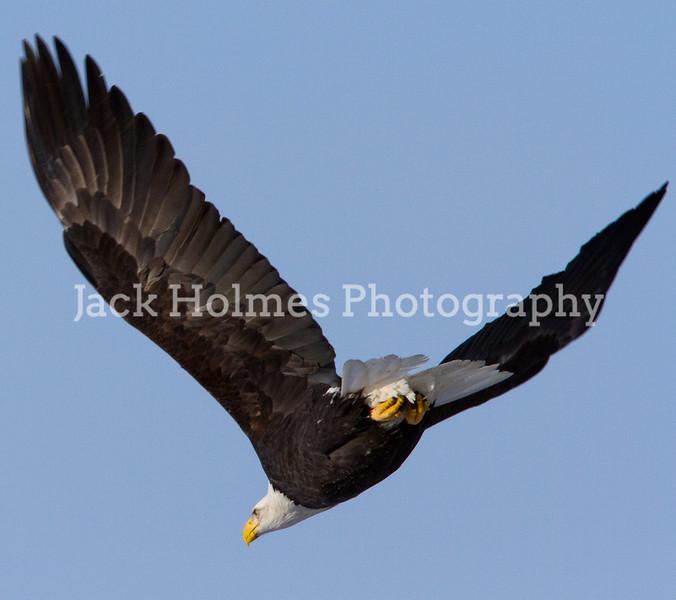 Tuesday_Eagle_7D-123