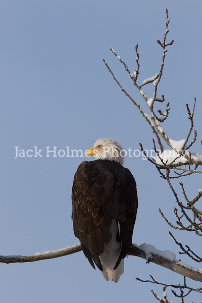 Tuesday_Eagle_7D-62
