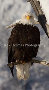 Tuesday_Eagle_7D-170