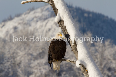 Tuesday_Eagle_7D-167